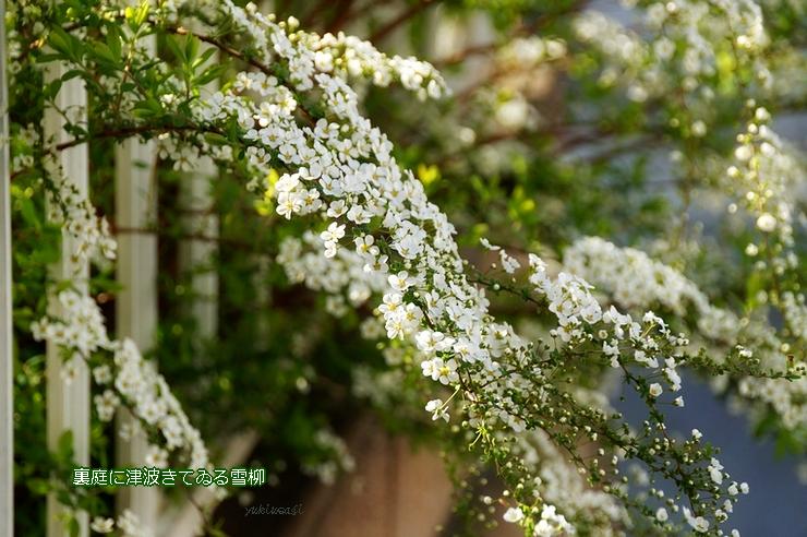 Yukiyanagi326hoseimoji
