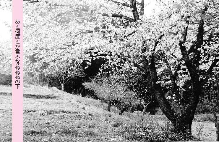 Sakura0404hoseimoji_2