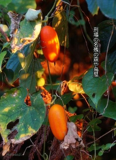 Karasuuri171027hoseimoji